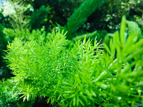 Free stock photo of Green Plant, mothernature