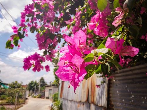Immagine gratuita di fiore, fiori artificiali, fiori bellissimi, rosa