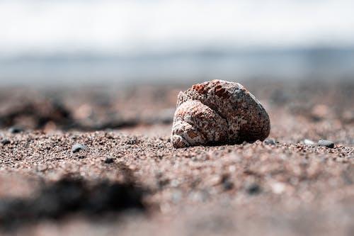 คลังภาพถ่ายฟรี ของ ชายทะเล, ชายฝั่ง, ทราย, มหาสมุทร