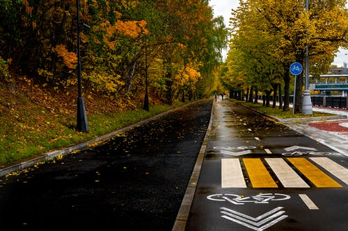 Free stock photo of asphalt, autumn, autumnal, background
