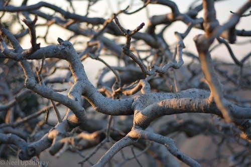 Ảnh lưu trữ miễn phí về #autumn, #cây, #noleaf, #sajjangarh