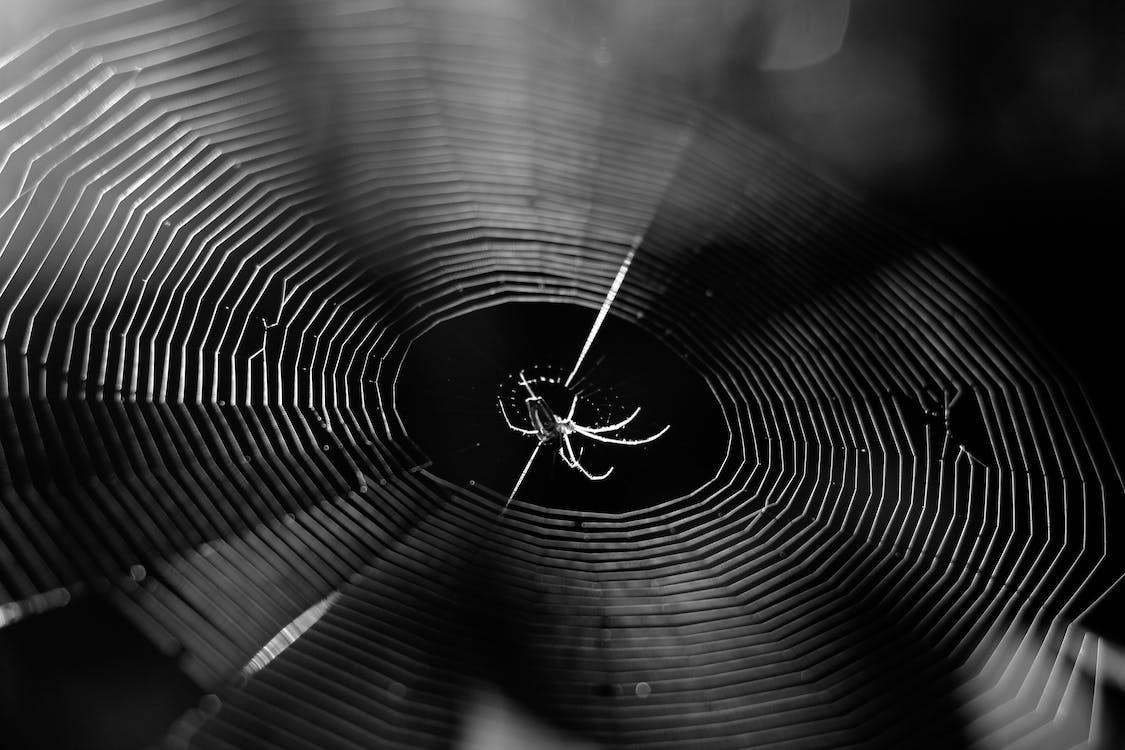 animal, aranha, artrópodes