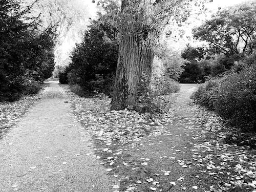Foto d'estoc gratuïta de arbre, bosc, camí, tardor