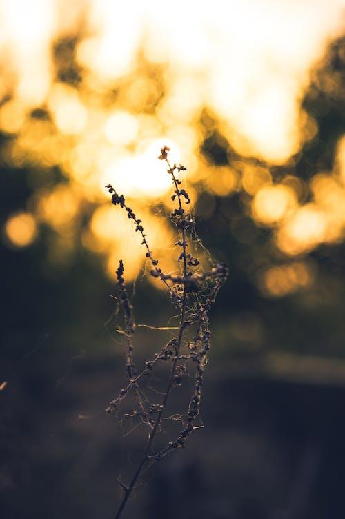 Immagine gratuita di contro la luce, effetto luminoso, foto del giorno, luce e ombra