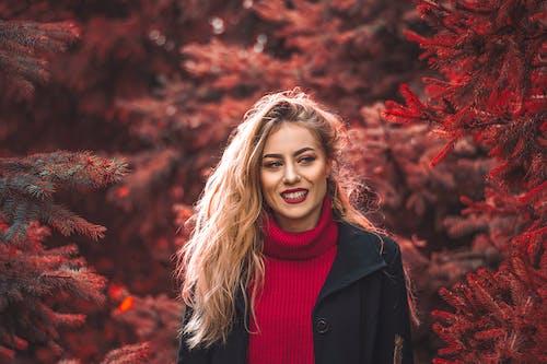 Бесплатное стоковое фото с beautiful, Christmas, cold, color