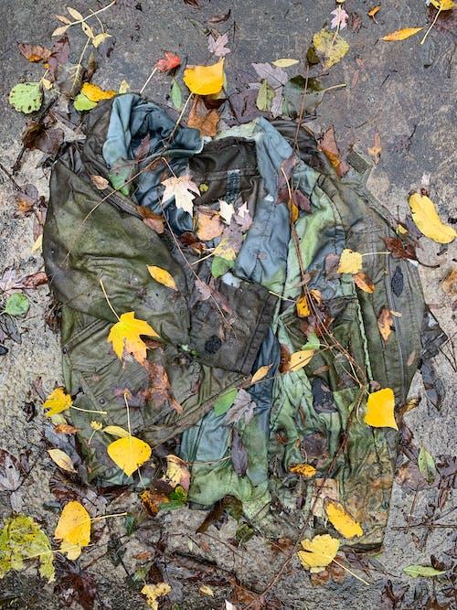 Foto d'estoc gratuïta de colors de tardor, decaïment, decaïment urbà, jaqueta