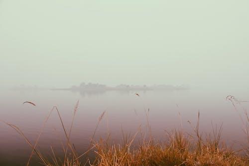 çim, göl içeren Ücretsiz stok fotoğraf
