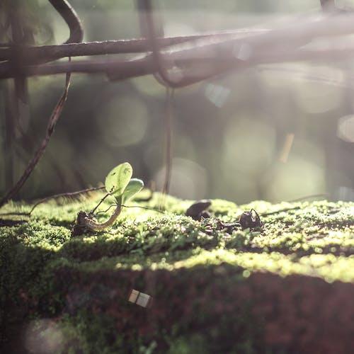 Ingyenes stockfotó fotoszintézis, gyár, napfény, növekedés témában