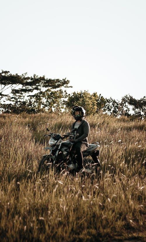 Fotos de stock gratuitas de al aire libre, campo, césped, equitación