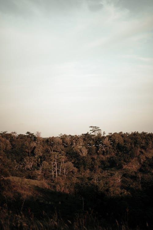골든 아워, 나무, 새벽, 수평선의 무료 스톡 사진
