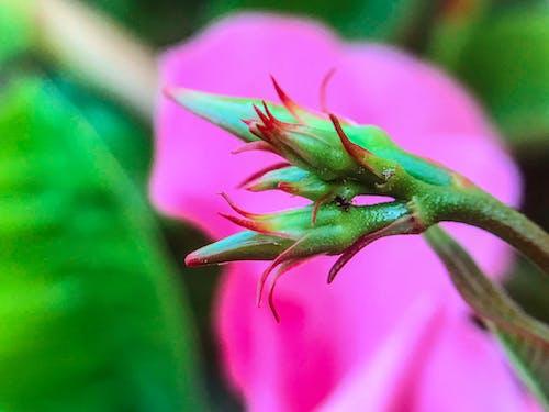 Bahçe, bitkiler, Çiçek bahçesi, doğa içeren Ücretsiz stok fotoğraf
