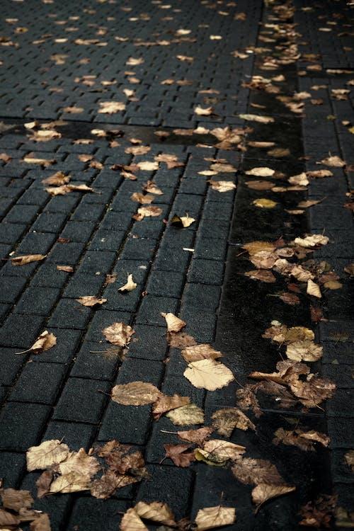 Ilmainen kuvapankkikuva tunnisteilla elämää luonnossa, iso lehti, kauneus luonnossa, kaupunkialue