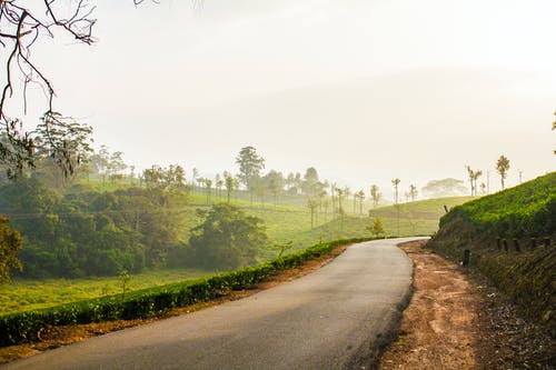 Free stock photo of forest, india, landscape