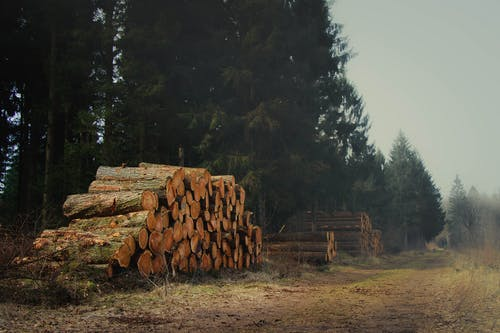 Cut Logs on Green Field Surrounded With Tall and Green Trees