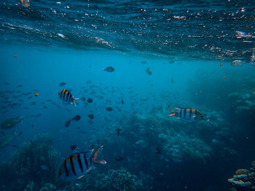 Photos gratuites de aquatique, corail, faune, loin