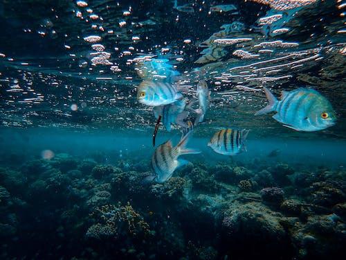Ảnh lưu trữ miễn phí về bơi lội, cá, đại dương, dưới nước