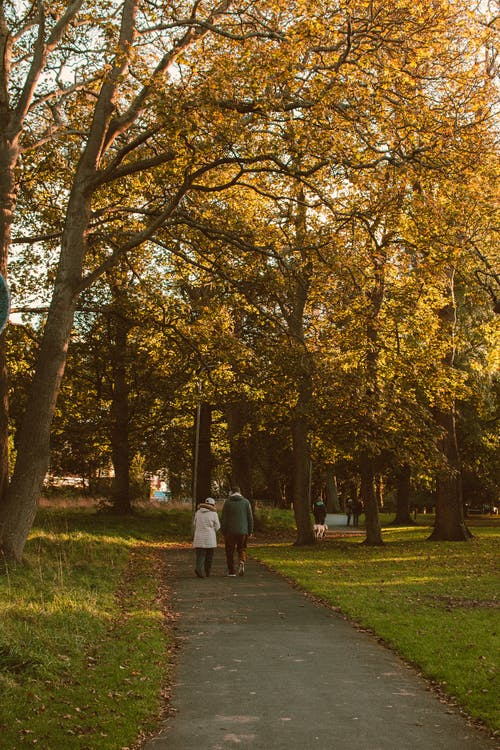 Man and Woman Walking on Pathway Between Trees