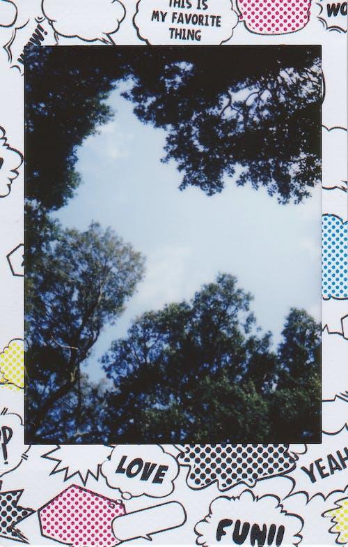 Δωρεάν στοκ φωτογραφιών με δέντρα, κορνίζα, οπτική σκουληκιών, στιγμή