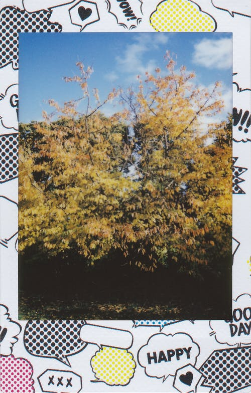 Polaroid Photo Of Trees