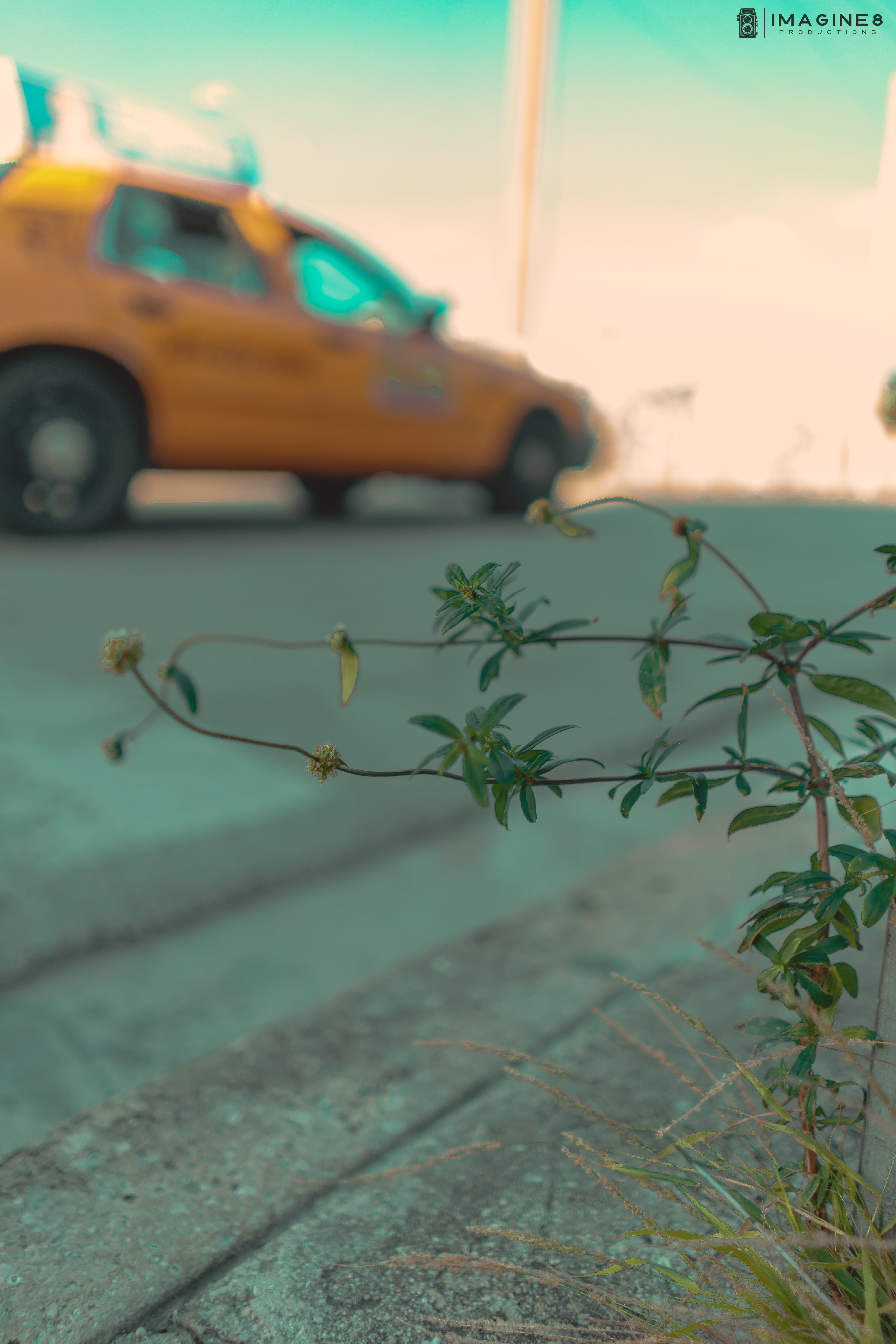 Free stock photo of beautiful flowers, city, street, taxi