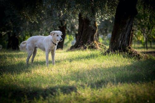 Fotos de stock gratuitas de arboles, belleza en la naturaleza, belleza natural, perro
