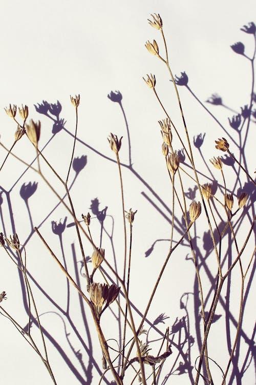 bitki, bitki örtüsü, Çiçekler, gölgeler içeren Ücretsiz stok fotoğraf