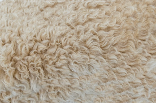 Free stock photo of dry, pattern, texture, fur