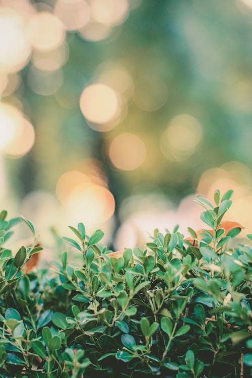 Бесплатное стоковое фото с выборочный фокус, зеленые растения, размытый, сад