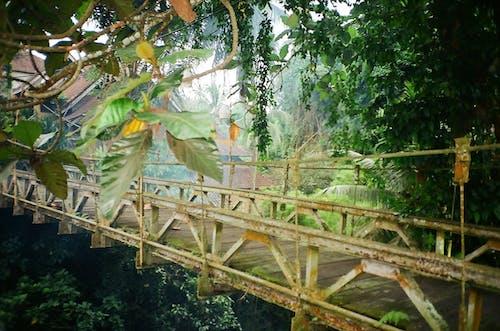 Fotos de stock gratuitas de bali, jungla, naturaleza, Olimpo