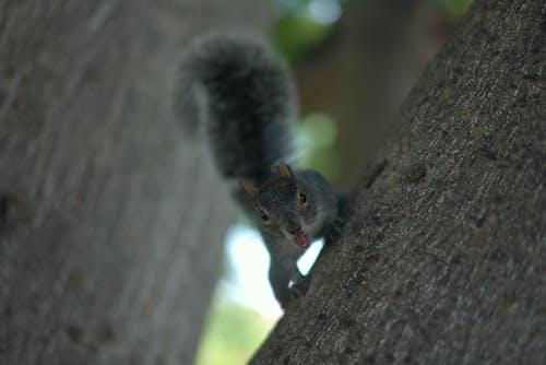 シマリス, ボケ, 木の無料の写真素材