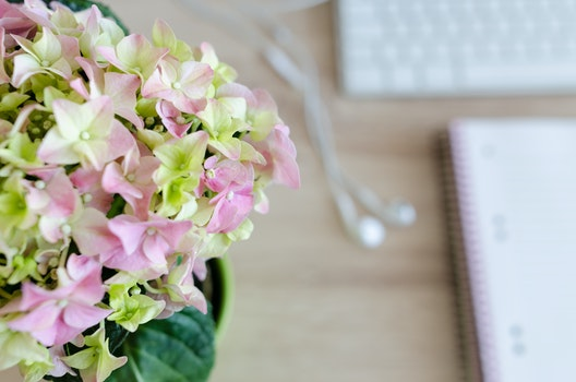 Free stock photo of wood, flowers, desk, notebook