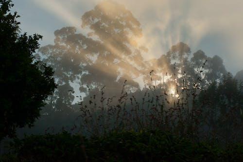 夜明け, 日の出, 日没, 木の無料の写真素材