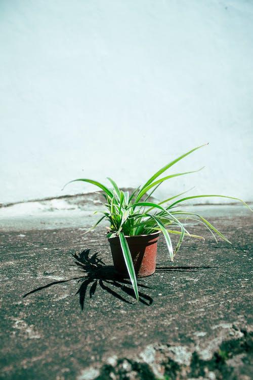 Základová fotografie zdarma na téma betonový povrch, denní, drobný, hrnec
