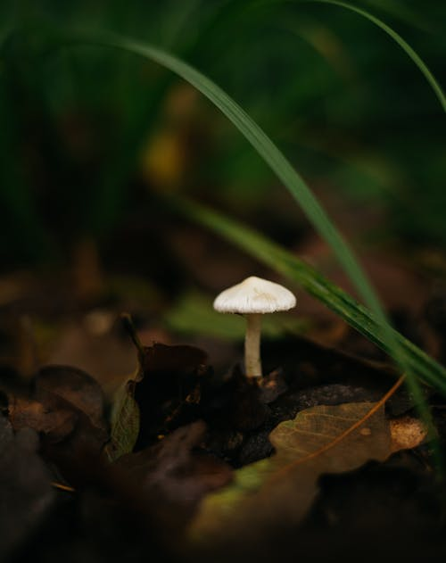 Free stock photo of forest mushroom, lonely, small