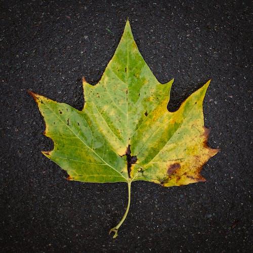 가을, 간, 떨어지다, 이파리의 무료 스톡 사진