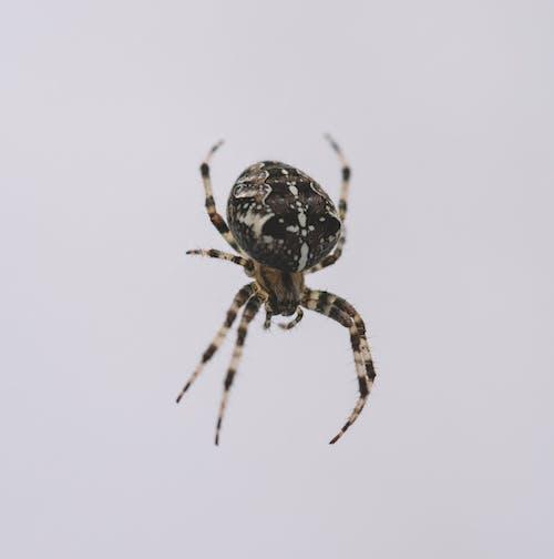 Free stock photo of animal, spider
