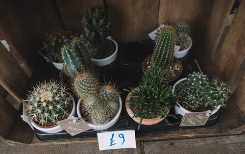 Free stock photo of cactus, crate, wooden