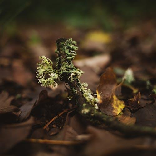 Free stock photo of moss, nature