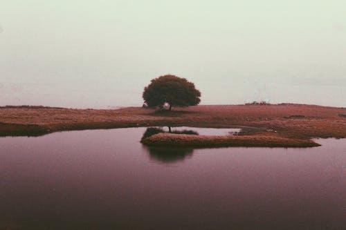ağaç, akşam karanlığı, çekilmiş, gökyüzü içeren Ücretsiz stok fotoğraf
