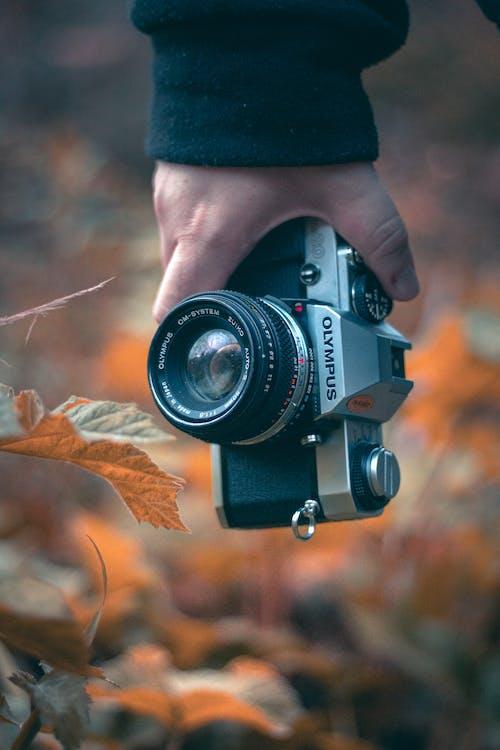 Foto d'estoc gratuïta de càmera, càmera digital, fotògraf, fulla d'auró