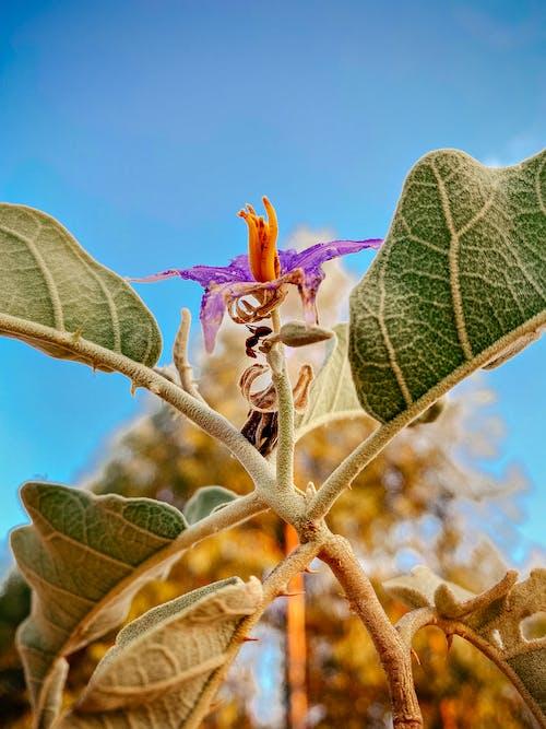 Macro Photography of Purple and Orange Petaled Flower