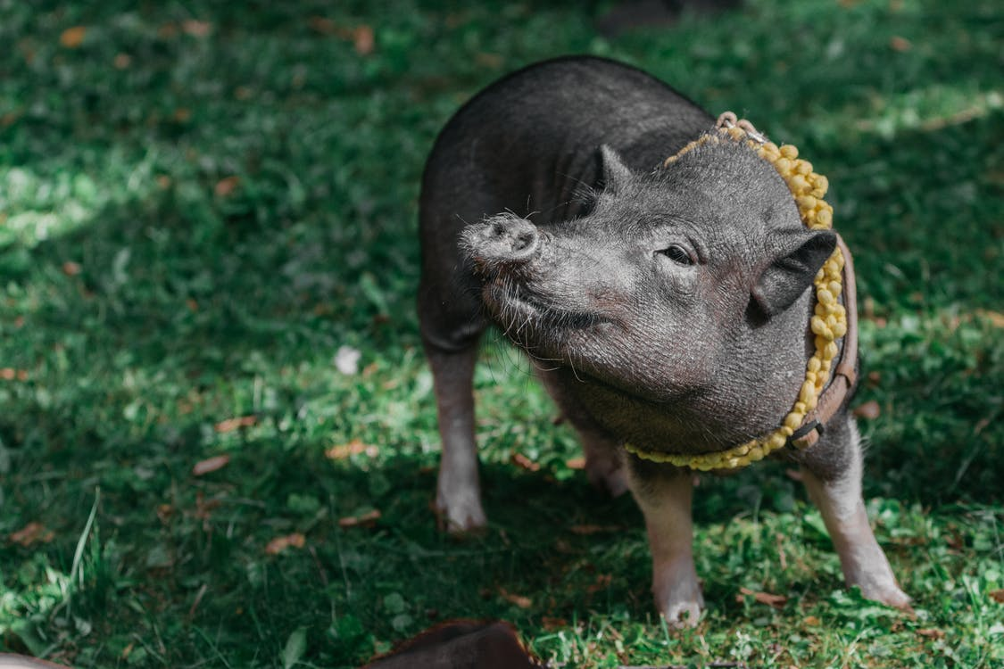 Photo Of Pig On Grass