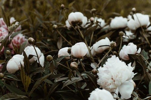 白い花びらの花のクローズアップ写真