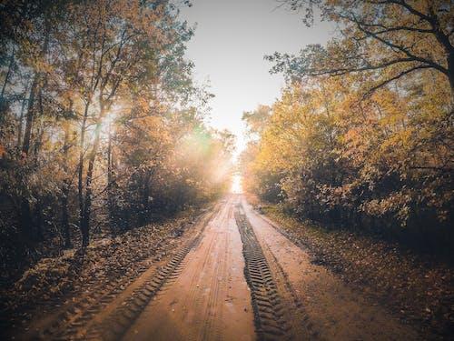 秋天的顏色 的 免費圖庫相片