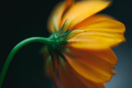 Безкоштовне стокове фото на тему «апельсин, зелений, квітка, розмитий фон»