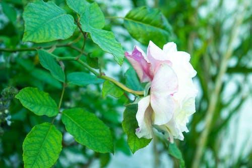 Foto profissional grátis de botão de flor, flor cor-de-rosa, flor rosa, flora