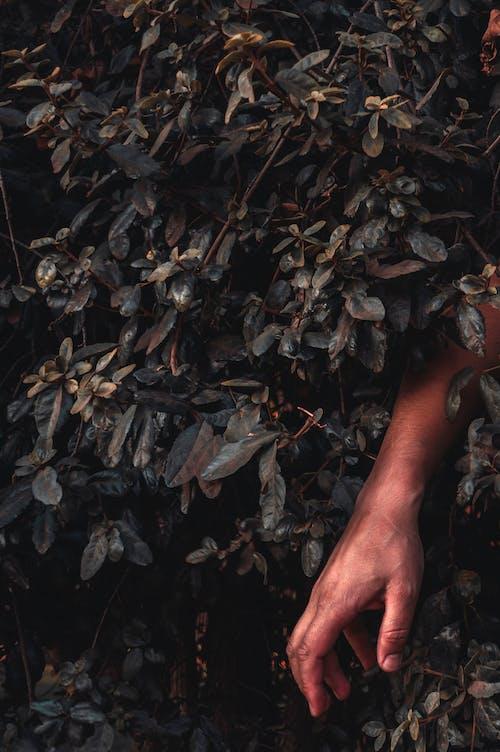 Gratis lagerfoto af arm, blade, hånd, have