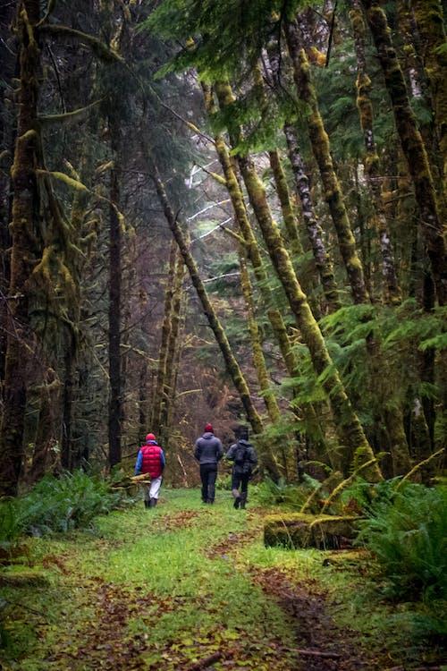 Ingyenes stockfotó erdei ösvény, erdő, moha nyom, ösvény témában