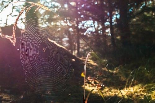 Ingyenes stockfotó pókháló témában