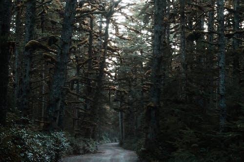 Ingyenes stockfotó esőerdő, földes út, sűrű erdő témában